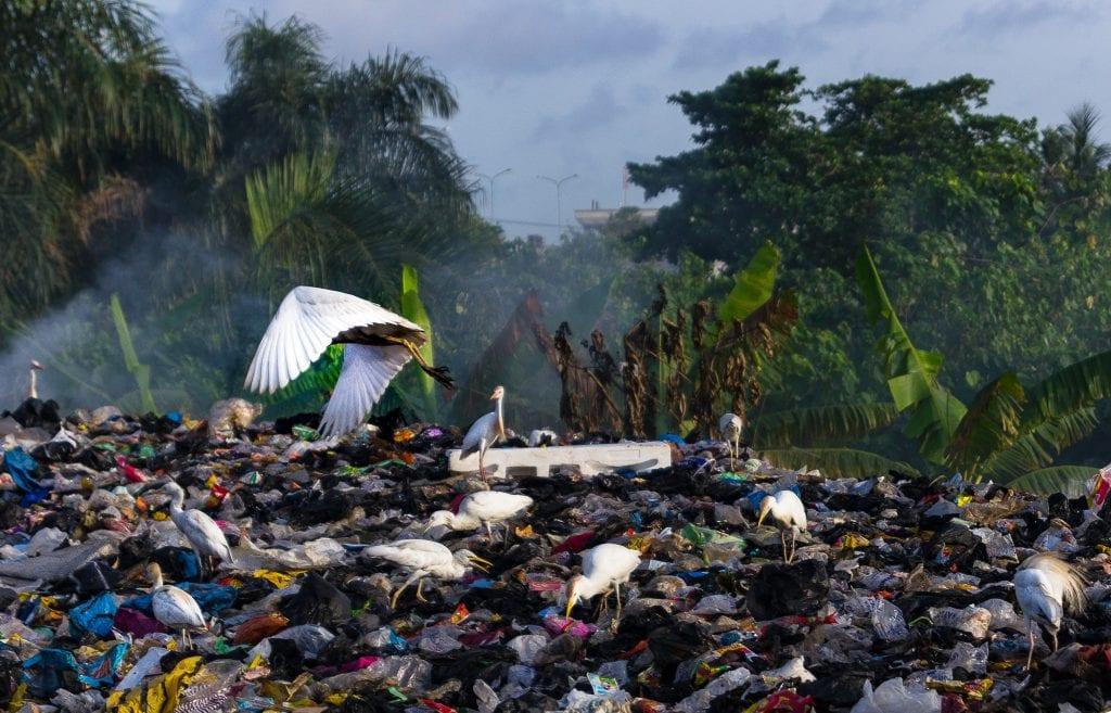landfill single-use plastics